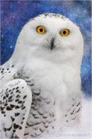 Hedwig ~ Harry Potter Owl by AStoKo