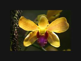 Orchid Photo 16 by blookz