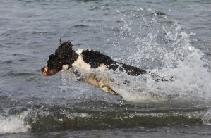 Seadog jumping by JuliZib