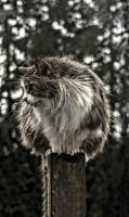 Wet Pole Cat by Mackingster