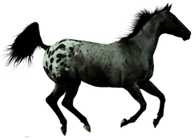 Precut Appaloosa by rigaboo