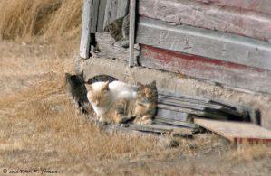 More Barn Cats by hunter1828