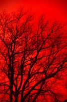 red-tree by AmeenS