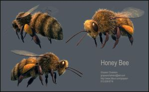 Honey Bee by grayson