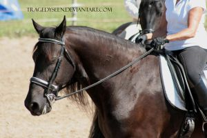 Friesian Stock 12 by tragedyseen