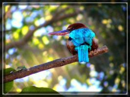 Kingfisher by Arghel