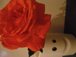 red rose by 9madgirl9