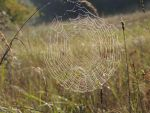 Spiderweb at Dawn by faithless12
