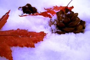 Fall Meets Winter by Vethonwen