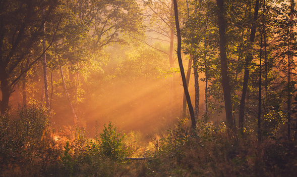Morning in the Forest by ferrohanc