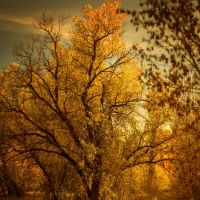 Golden... by VexingArt