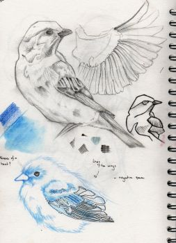 Bluebird sketches by realgumption