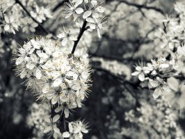 Flowers in spring by Nendy