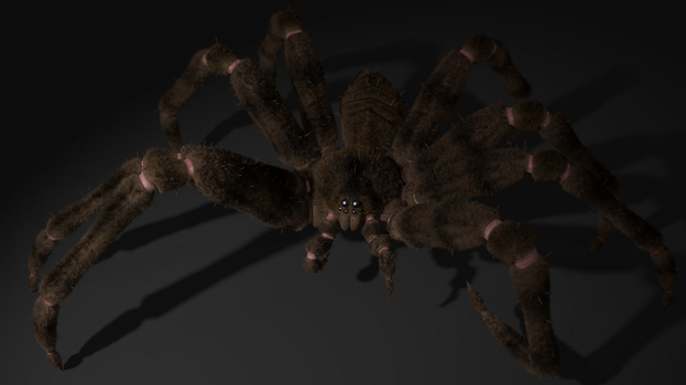 Stylized Spider by phildog