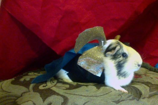 Loki Mischief Avengers Guinea Pig. by mch2020moehunt