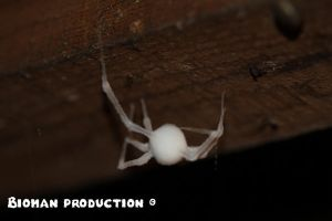 Frozen Spider's Sister by BiomanProduction