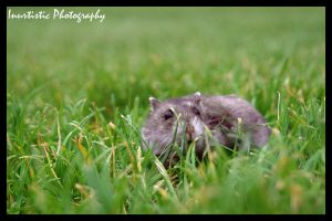 In the grass by inu-chan-free