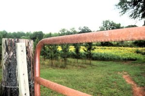 country fence. by StillSouthern