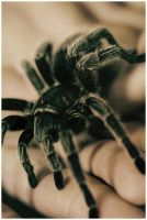 Tarantula by twistedelegance