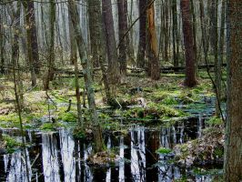Swamps XX by Vrolok-stock