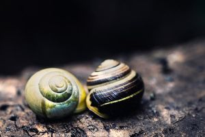 snails by scott-leeson