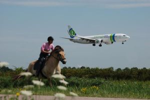 Fjord Horse vs. Airplane by marisz