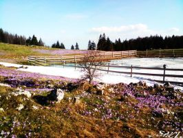 Winter and spring at same time by Saici