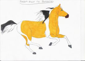 Freedom knows no boundaries by mustang-spirit