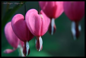Bleeding Hearts by DragonInk7