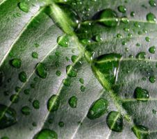 Leaf droplets by postaldude66