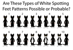 Possible Types of White Spotting Feet Patterns by MrBig2