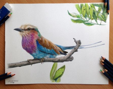 Bird color pencil drawing by AtomiccircuS