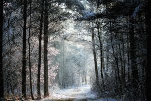 Trees, snow and light by Tjabula