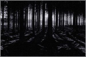 dark forest by noobs