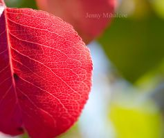 Red by jenny-mihalcoe
