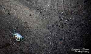 White Crab. Day 166 - 15/06/13 by oEmmanuele
