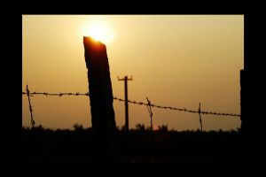 Barbwire Fence by consciousspace