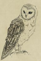 Barn Owl by Veavictis
