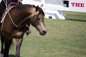 STOCK - Equitana 2013-43 by fillyrox