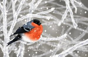 Bullfinch  by albertoguerra