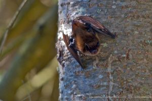 A Bat in the day by LInconnu24