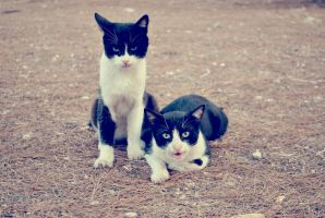 Twin cats by bebuk