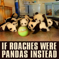 if roaches were pandas instead by VinnieScullo