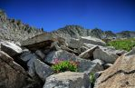 Rocks and Flowers by mjohanson