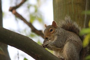 The Squirrel by GoncaloCarvalho