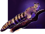 Ringtail Cat by NazzCat