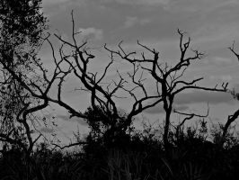 creepy tree by DevonDavis