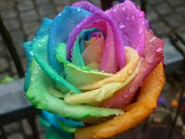 Rainbow rose by ToniHeat