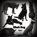 Black Dog by BFstock