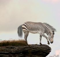 zebra by darkpixe